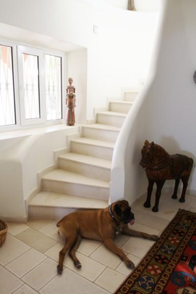 Dog Life in Corfu Villa