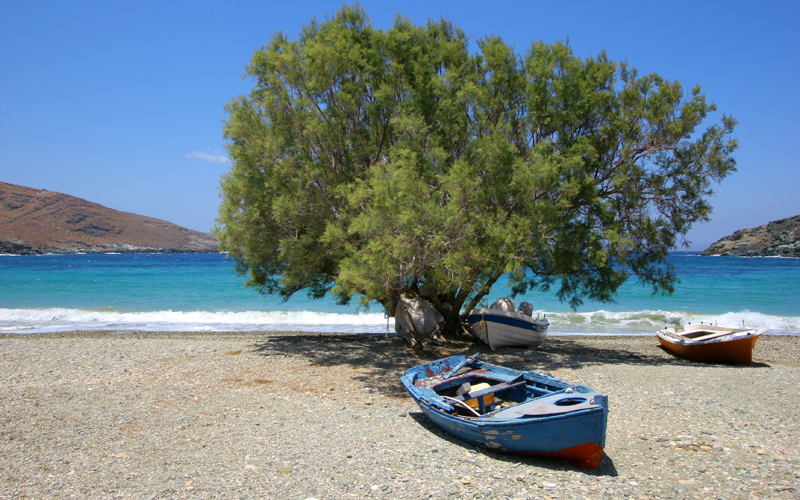 Lonely Tree in Kythnos Beach