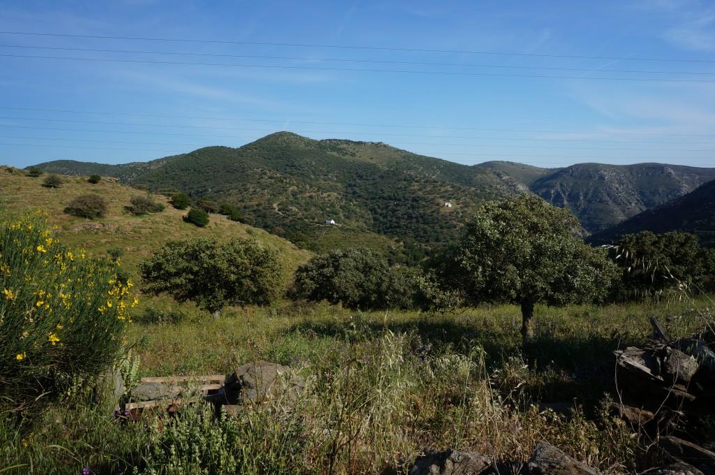 Nature surrounding our villa in Kea/Tzia