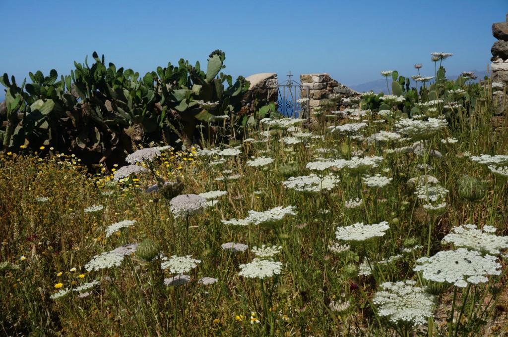 Cactus in Paros island