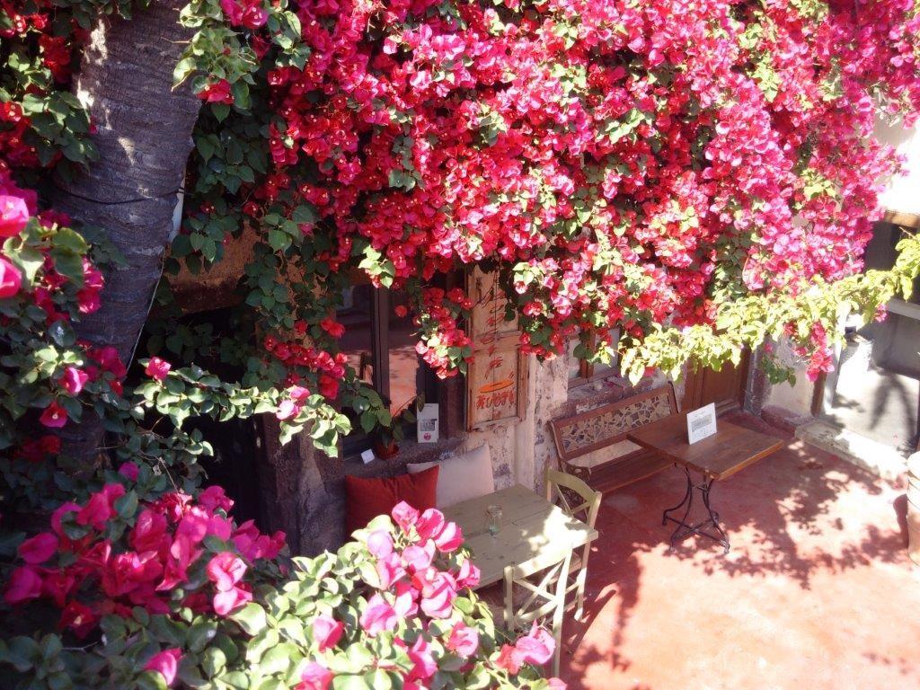 Santorini Flowers - Coffeshop