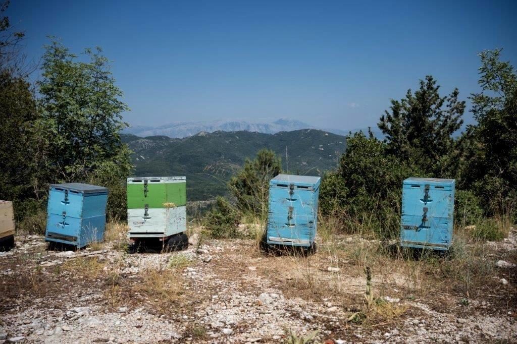 Lefkada Honey - Luxury Holidays in Greece