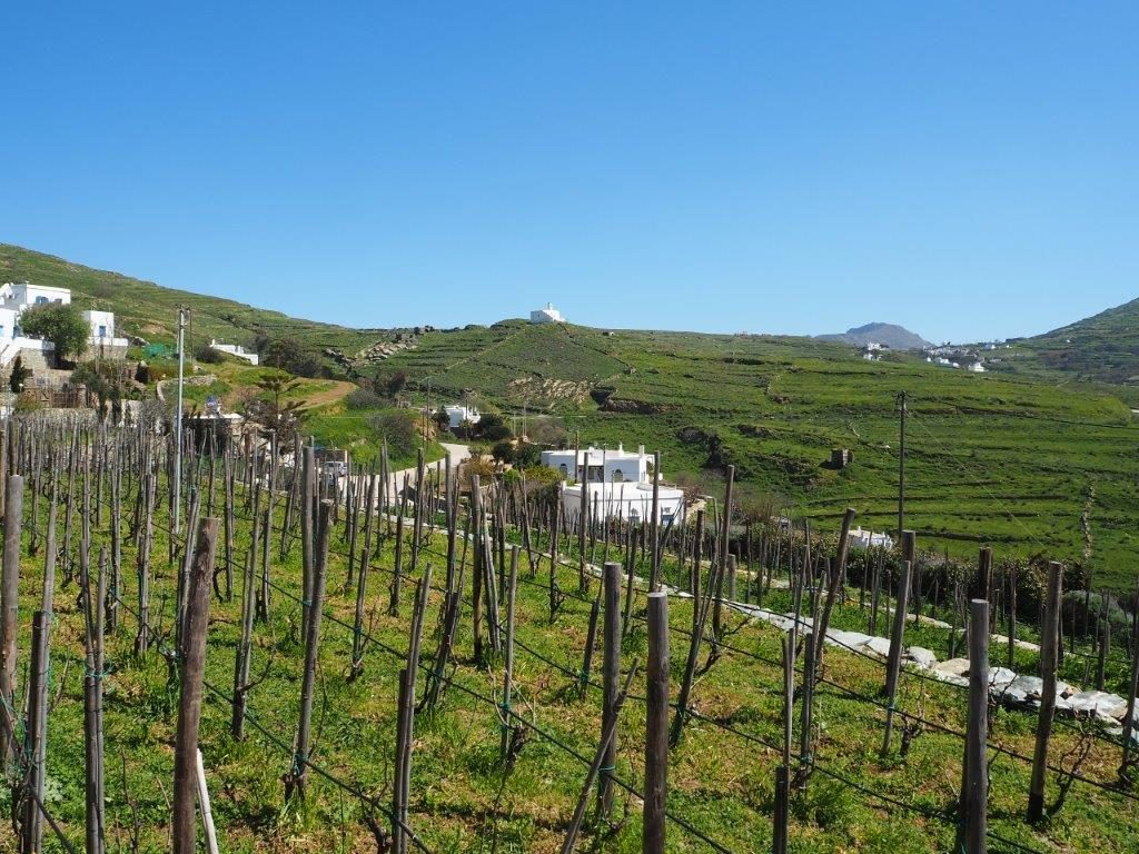 Vineyard in Tinos - Luxury Holidays in Tinos