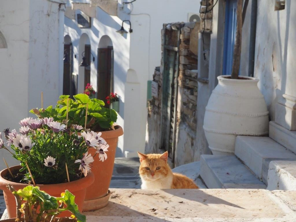 Luxury Holidays in Tinos